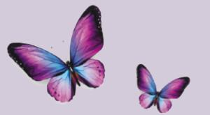 papilllon-page-blog